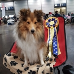Eliza vom Erkelenzer Land: WORLD DOG SHOW Leipzig 2017