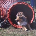 Jacie von den Rethörnchen