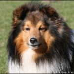 Jasper von den Rethörnchen (