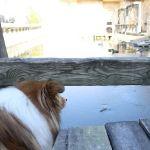 Sheldieck's Single Sam im Zoo Hannover