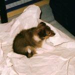 welpen-2003-janosch-011