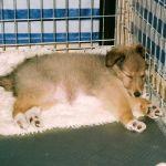 welpen-2003-07-008