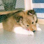 welpen-2003-07-012