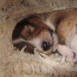 welpen-2008-05-03-008