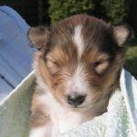 welpen-2008-05-10-003