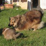 welpen-2008-05-17-002