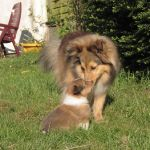 welpen-2008-05-17-004