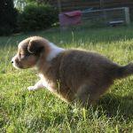 welpen-2008-05-17-005