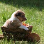 welpen-2008-05-18-007