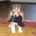 welpen-2008-05-24-002