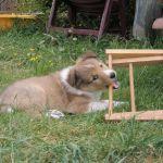 welpen-2008-05-31-001