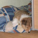 welpen-2008-05-31-004
