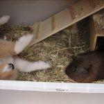 welpen-2008-06-07-002