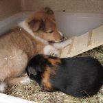 welpen-2008-06-07-003