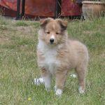 welpen-2008-06-14-006